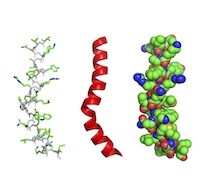 An alpha helix of the protein lysin (PDB ID: 1lis) rendered 3 ways as cartoon, cartoon + line, and space filling, respectively from left to right.